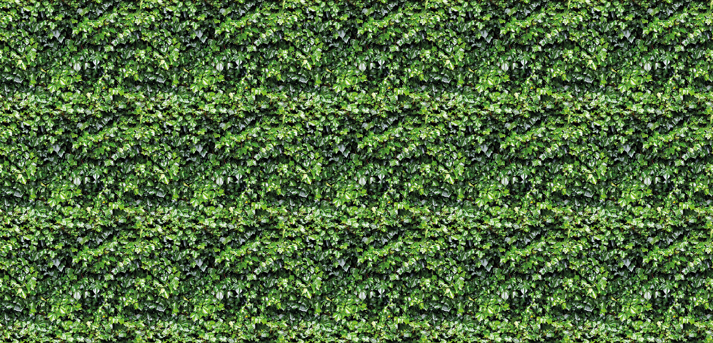 Ivy Wall Garden Green