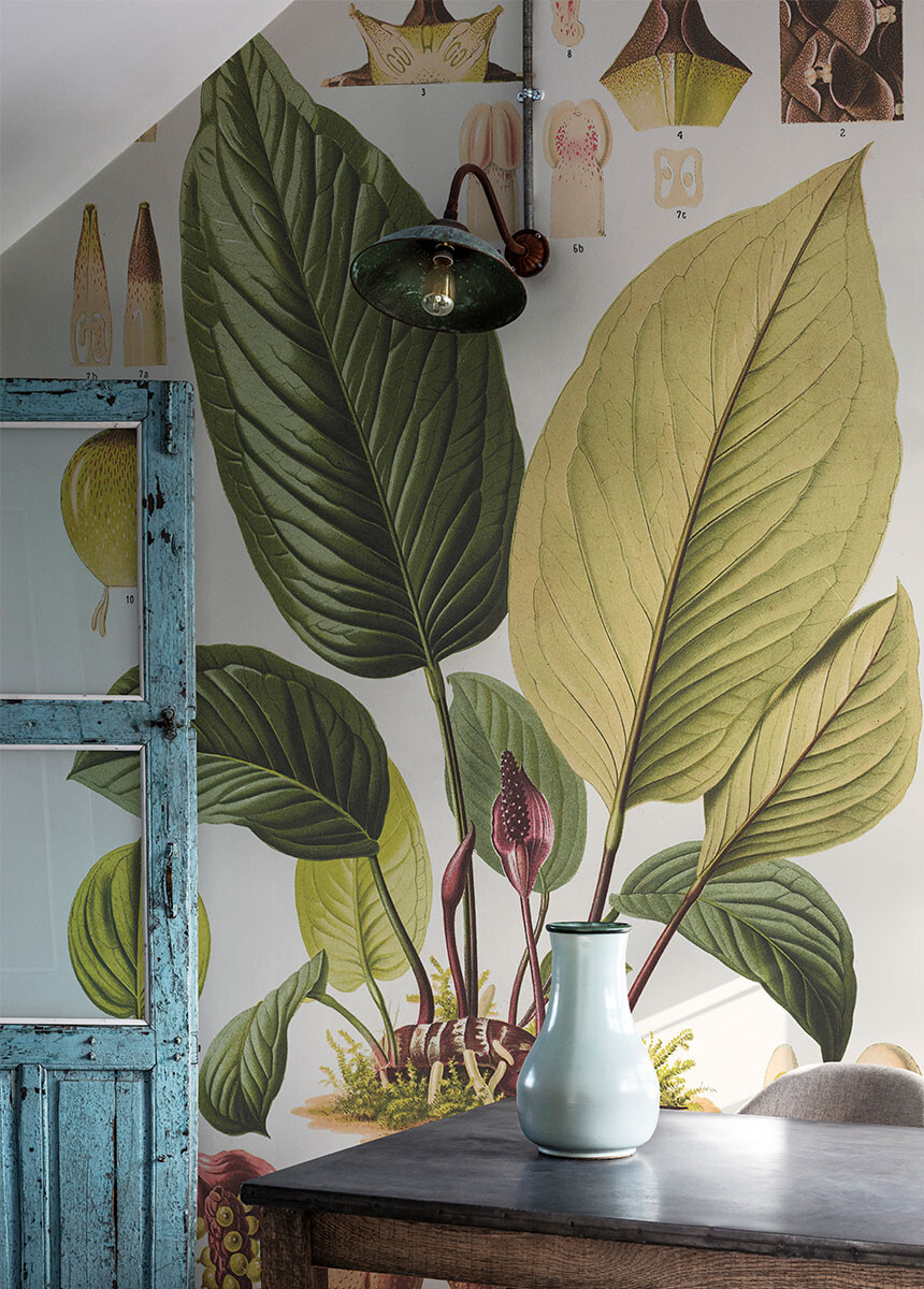 'Anthurium Radicans' Wallpaper murals