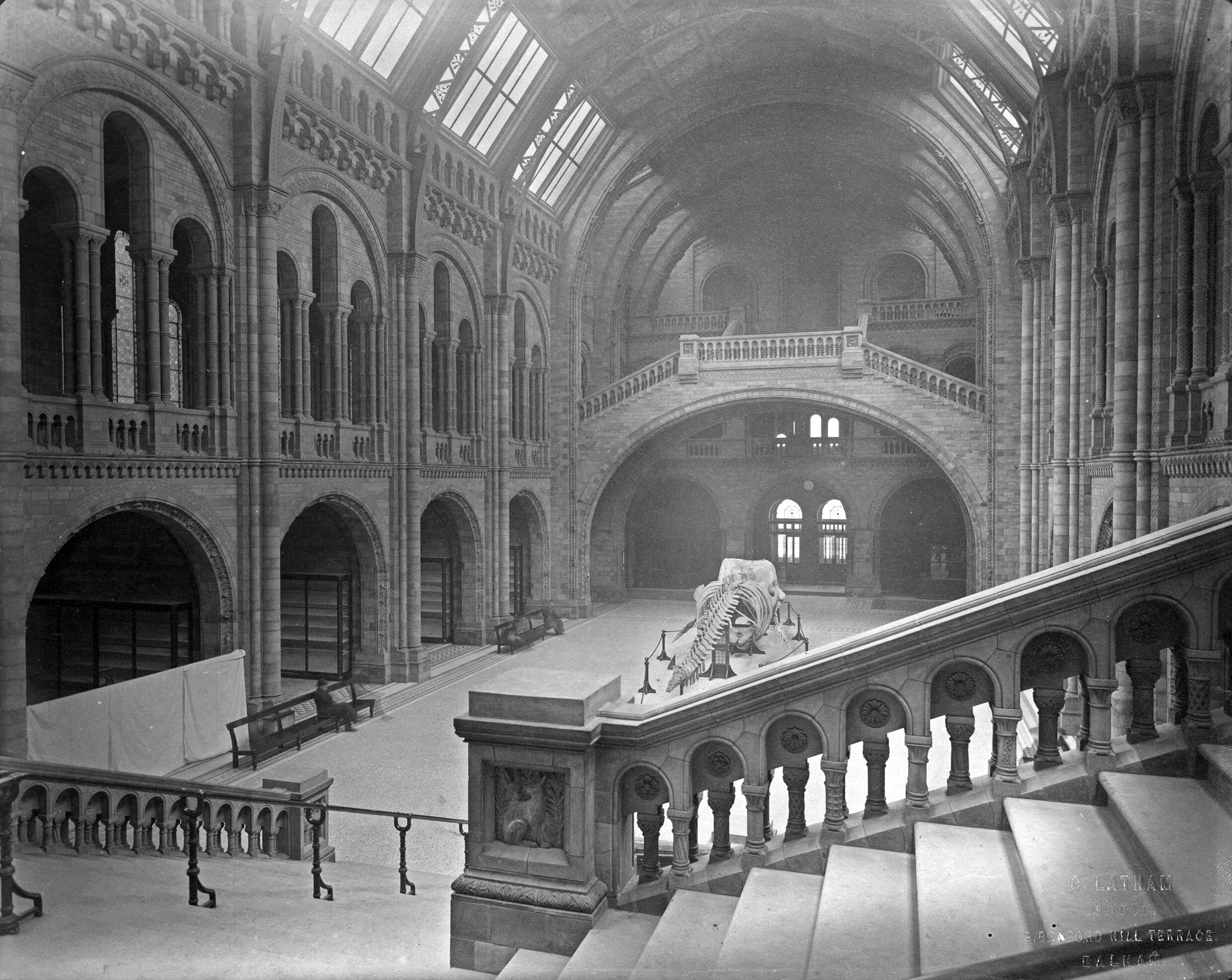 The Natural History Museum Central Hall, Looking South