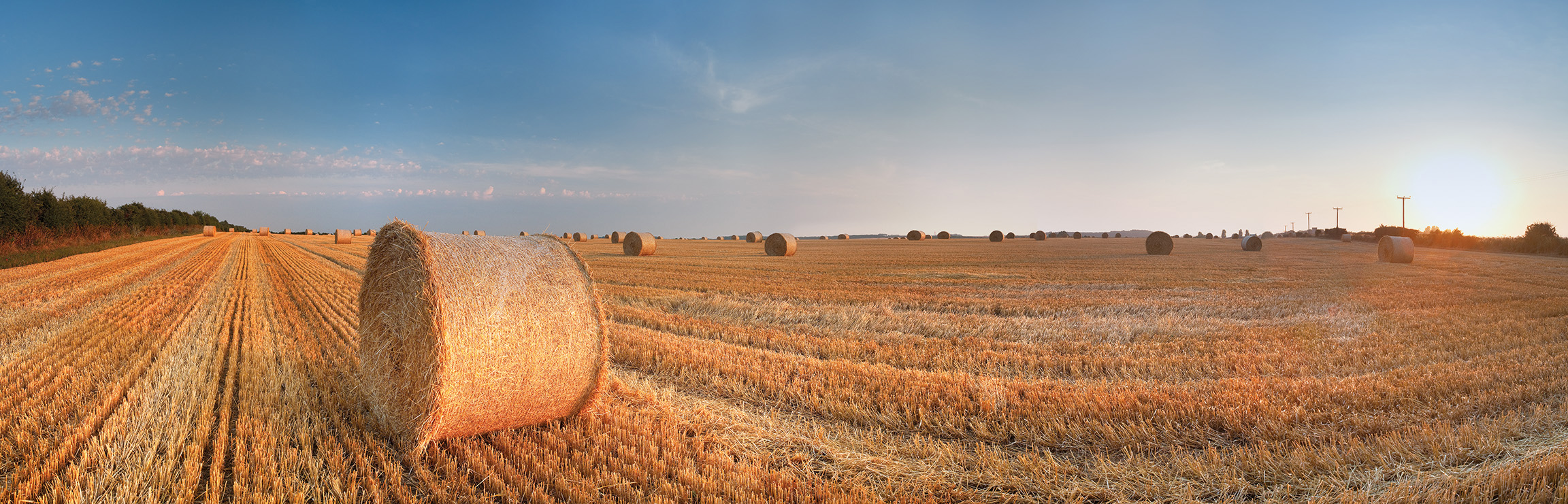 Round Wheat Bales In Field After Harvesting