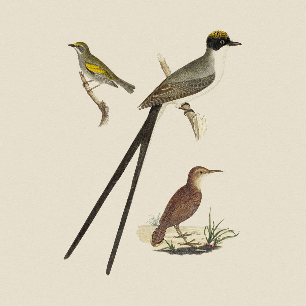 Flycatcher, Anteater and Warbler