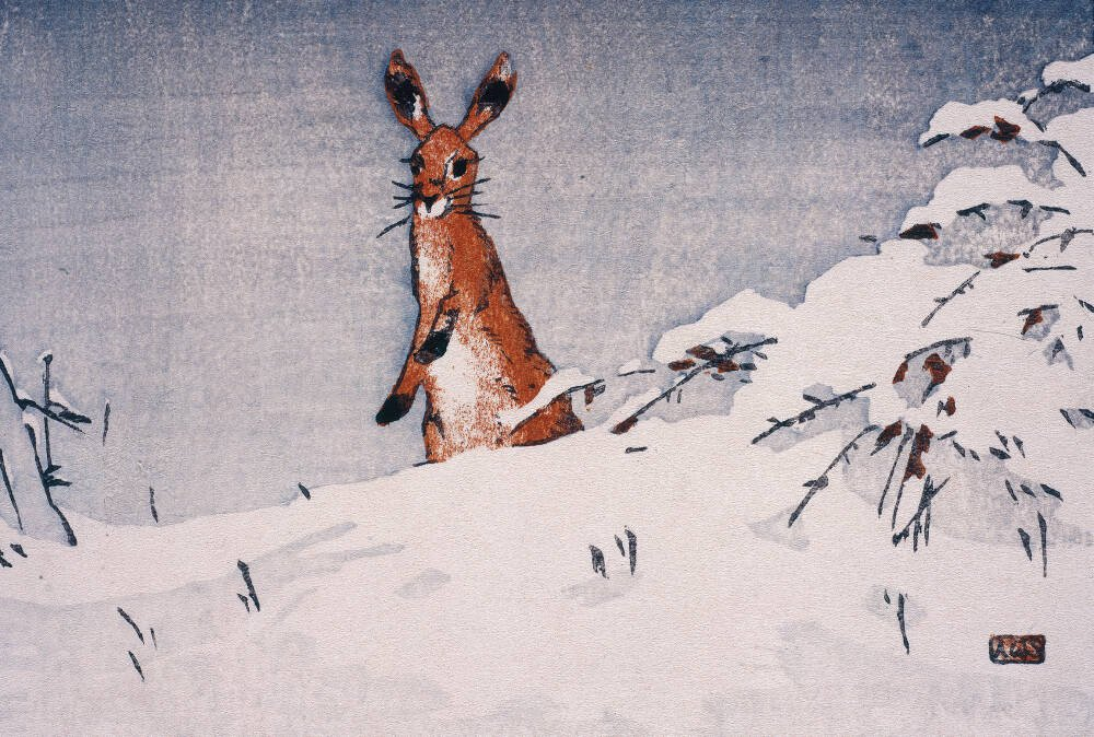 Snow and Hare