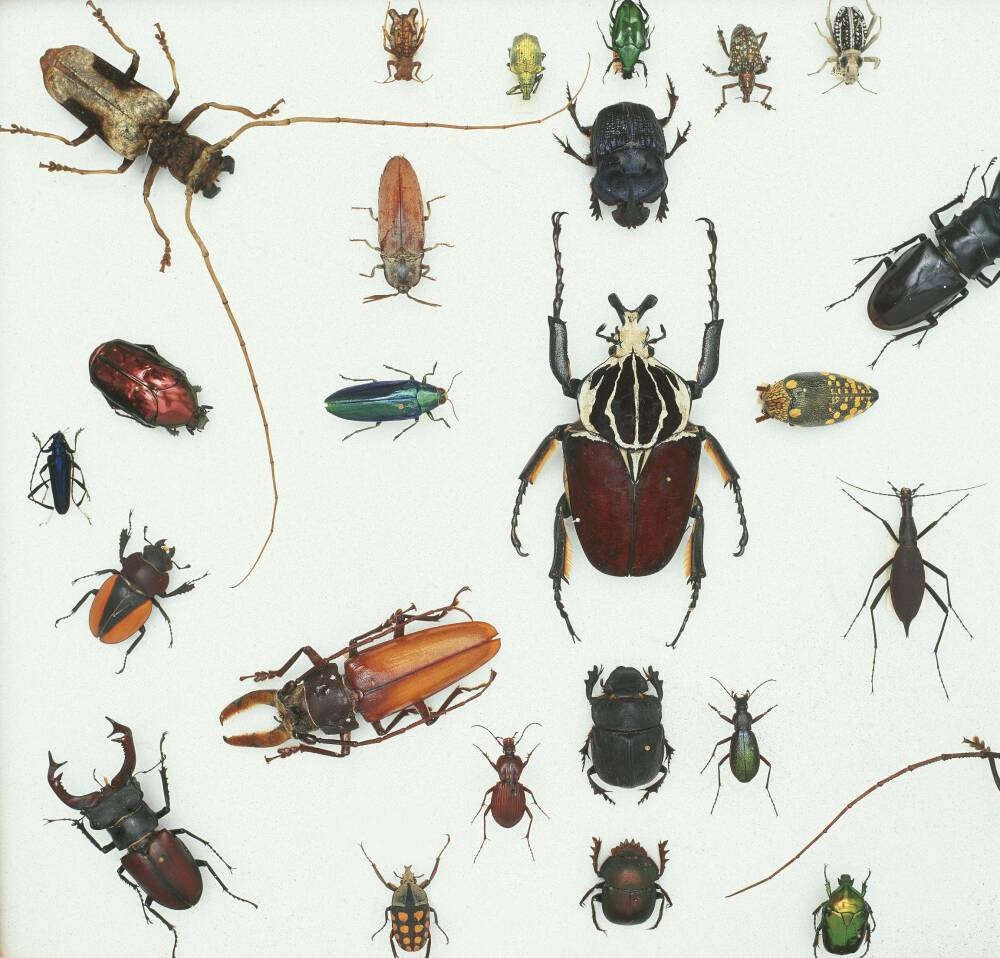 Various Beetles 3
