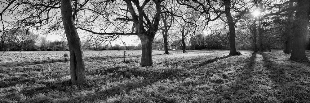 Norfolk Winter Landscape B&W