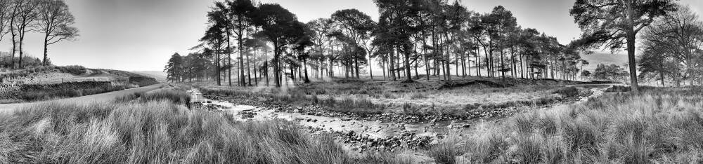 Forest of Bowland II B&W