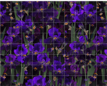 'Iris Panorama' Ceramic Tile Mural