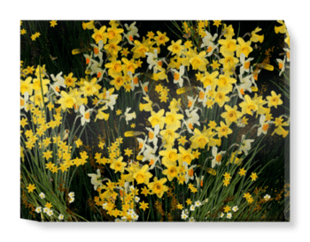 'Welsh Daffodils - Anthracite' Canvas Wall Art