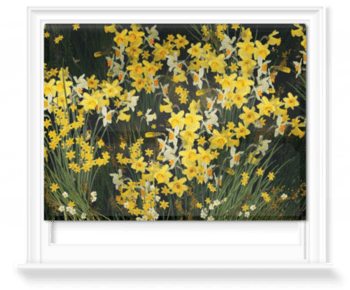 'Welsh Daffodils - Anthracite' Roller Blind