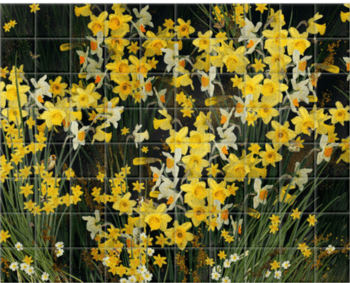 'Welsh Daffodils - Anthracite' Ceramic Tile Mural