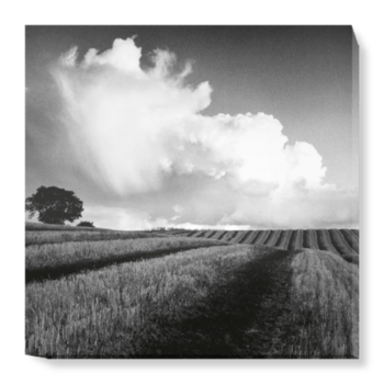 'Large White Cloud near Bilsington' Canvas Wall Art