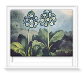 'A Group of Auriculas' Roller Blind