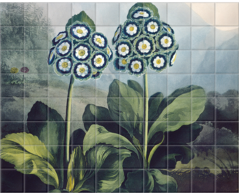 'A Group of Auriculas' Ceramic Tile Mural
