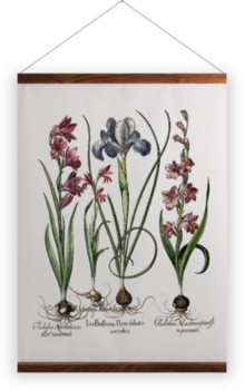 'Gladiolus and Iris plants' Wall Hanging