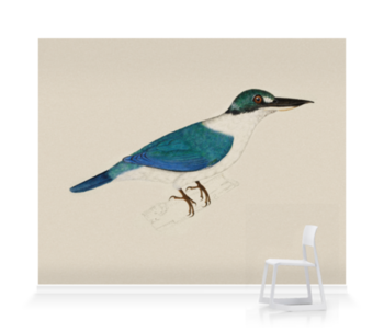 'White-Collared Kingfisher' Wallpaper Mural
