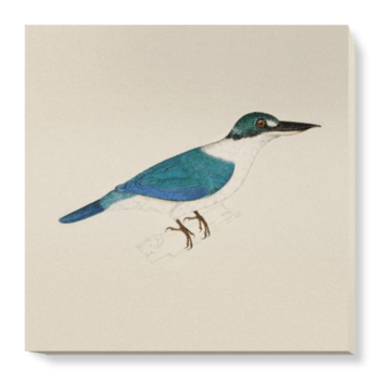 'White-Collared Kingfisher' Canvas Wall Art