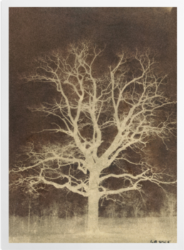 'Oak tree' Art Prints