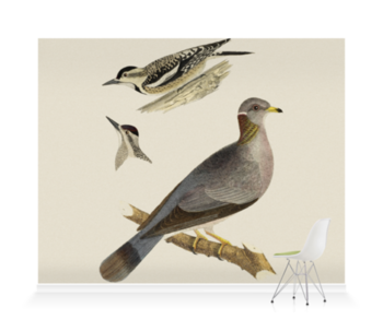 'Woodpeckers and Pigeon' Wallpaper Mural