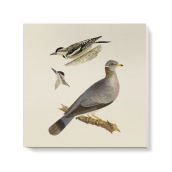 'Woodpeckers and Pigeon' Canvas Wall Art