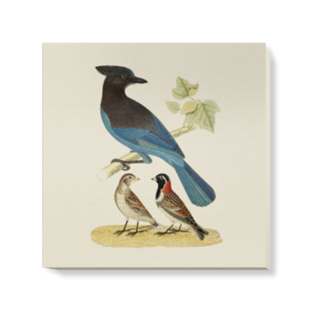 'Steller's Jay and Lapland Longspur' Canvas Wall Art