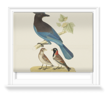 'Steller's Jay and Lapland Longspur' Roller Blind