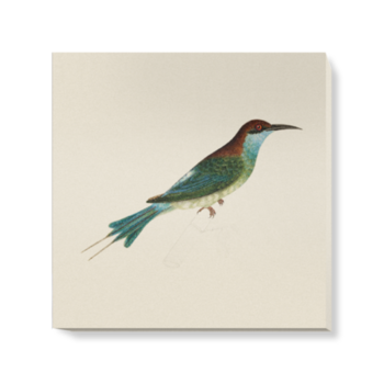 'Chestnut-Headed Bee-Eater' Canvas Wall Art