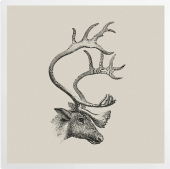 'The Caribou' Art Prints