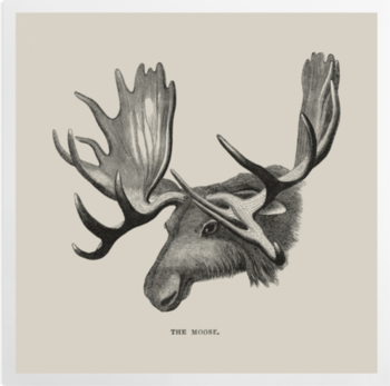 'The Moose' Art Prints