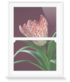 'The Flower of Fritillaria' Decorative Window Film