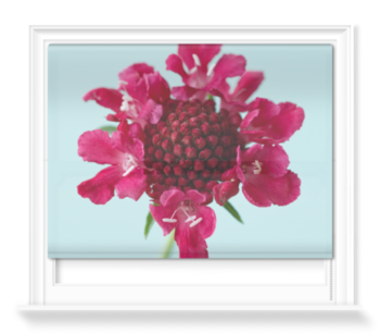 'The Flower of Scabiosa Chilli Pepper I' Roller Blind