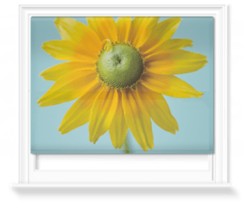 'The Flower of Rudbeckia Hirta Parairie Sun' Roller Blind