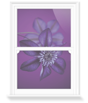 'Clematis Cassis I' Decorative Window Film