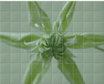 'Clematis Peppermint' Ceramic Tile Mural