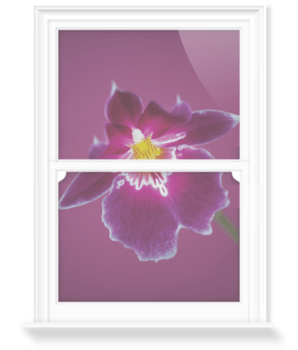 'Miltoniopsis' Decorative Window Film