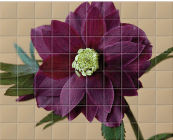 'Harvington Hellebores' Ceramic Tile Mural