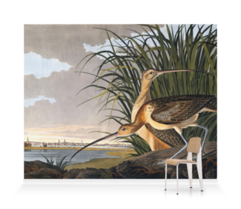 'Long-billed Curlew, Numenius americanus' Wallpaper Mural