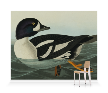 'Barrow's Goldeneye, Bucephala Islandica' Wallpaper Mural