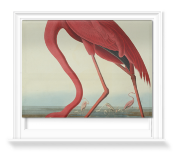 'Greater Flamingo, Phownicopterus Ruber' Roller Blind