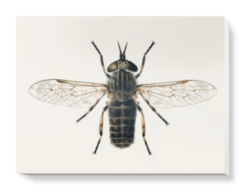 'Horse Fly' Canvas Wall Art