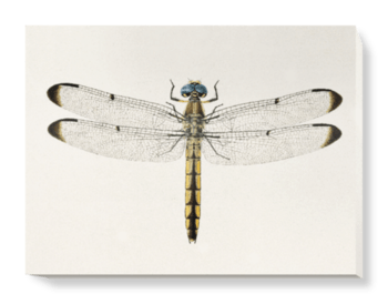 'Dragonfly 1' Canvas Wall Art