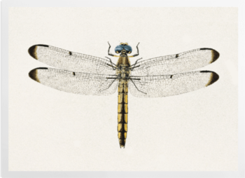 'Dragonfly 1' Art Prints