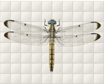 'Dragonfly 1' Ceramic Tile Mural