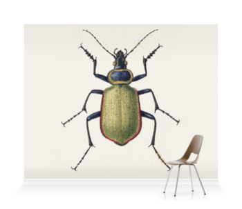'Carabus Sycophanta' Wallpaper Mural