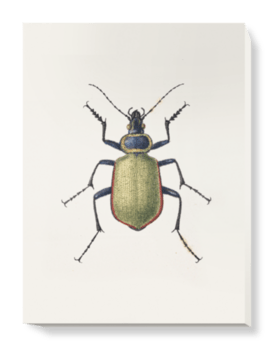 'Carabus Sycophanta' Canvas Wall Art