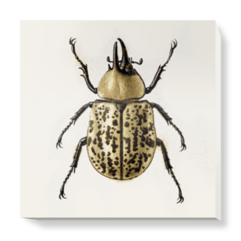 'Scarab Beetle' Canvas Wall Art