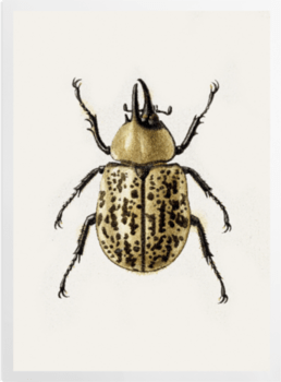 'Scarab Beetle' Art Prints