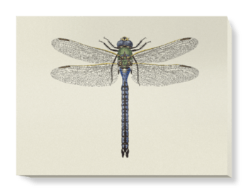 'Dragonfly 3' Canvas Wall Art
