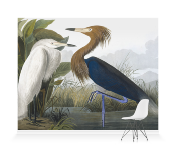 'Reddish Egret, Egretta Rufescens' Wallpaper Mural