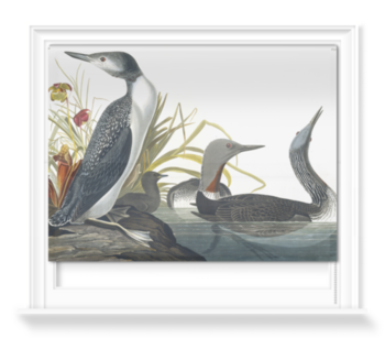 'Red-throated Loon, Gavia Stellata' Roller Blind