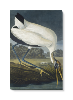 'Wood Stork, Mycteria American' Canvas Wall Art