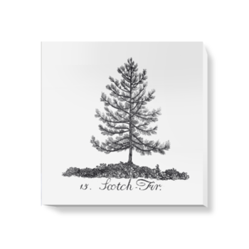 'Scotch Fir' Canvas Wall Art